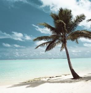 Palmbomen gaan dood