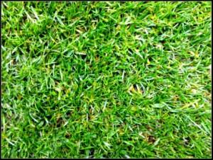 Heilig gras