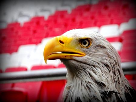 adelaar Benfica Lissabon
