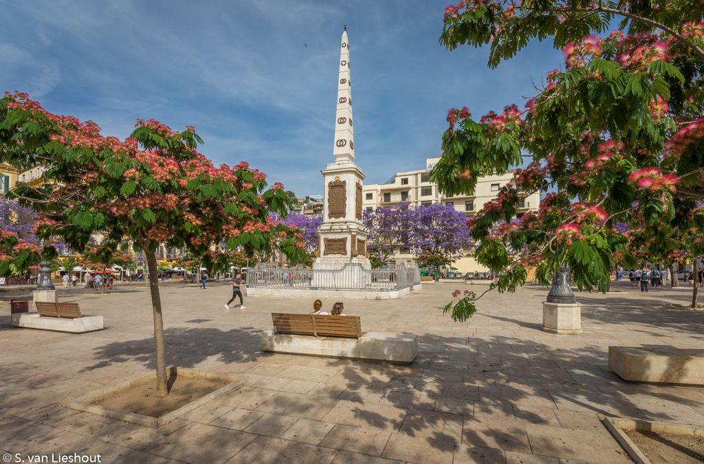 Jacaranda, de mooiste boom