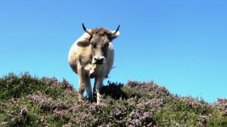 Asturias, Picos de Europa