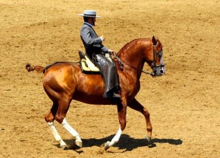 Cadiz, paarden