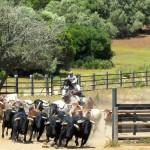 paarden en stierenshow Cadiz