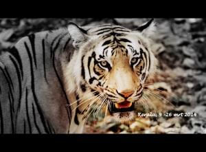 In Kerala zie je de wet van de jungle in praktijk