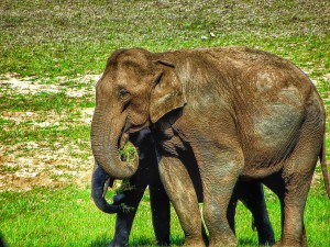 Periyar Wildlife Sanctuary
