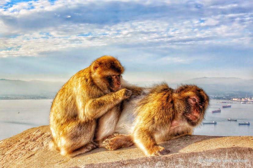 Boven op de apenrots van Gibraltar