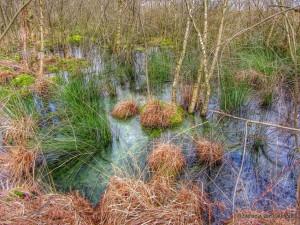 De Groote Peel moeras
