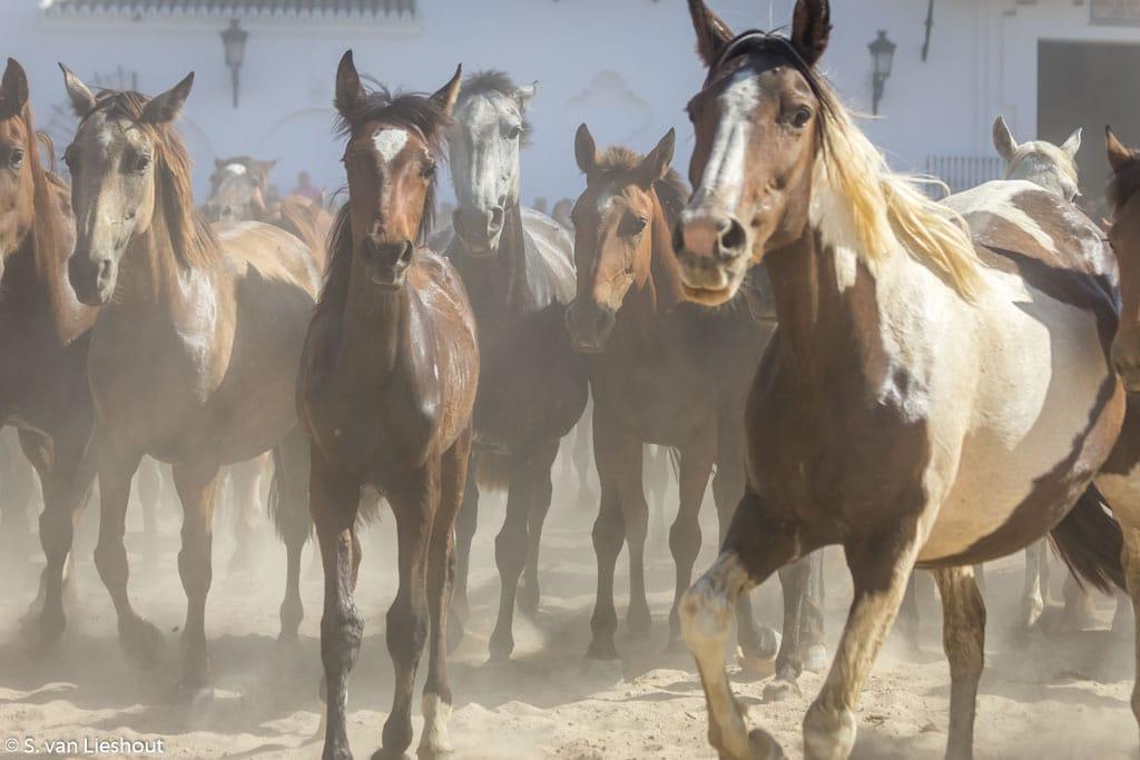 El Rocio Paarden