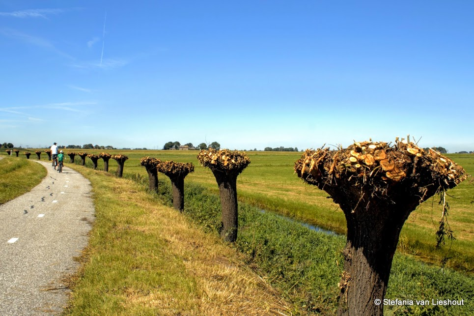 Het mooiste stukje Nederland: de Zuiderzeeroute op de fiets