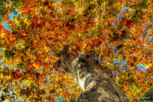 Malaga herfst