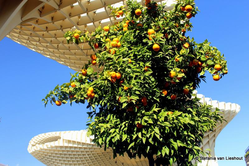 Sinaasappelbomen op Plaza de la Encarnación