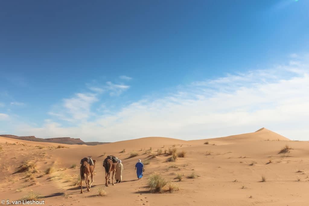 kamelentocht Marokko