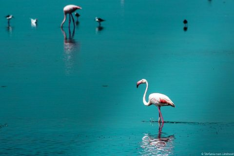 France Camargue nature flamingo
