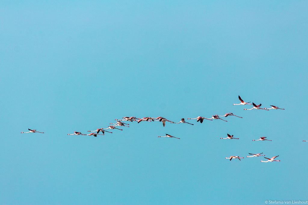 Flamingos Camargue natuurpark