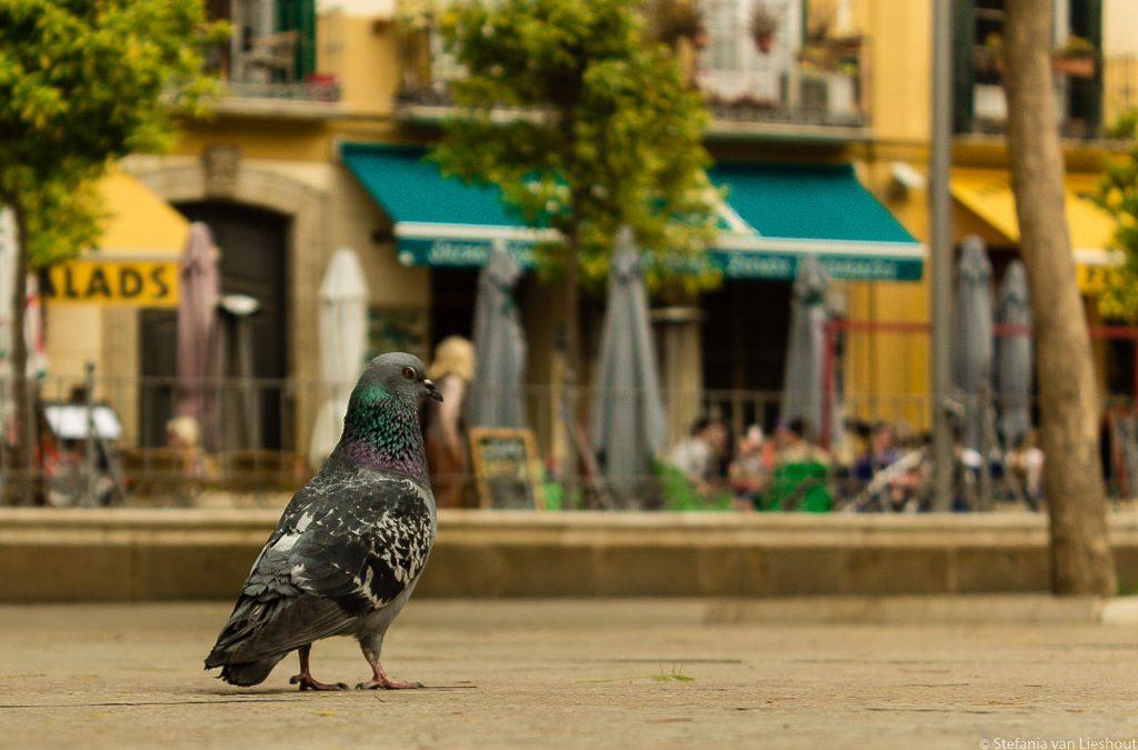 Malaga ongecensureerd op Plaza de la Merced