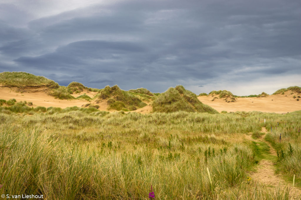 Sand dunesForvie