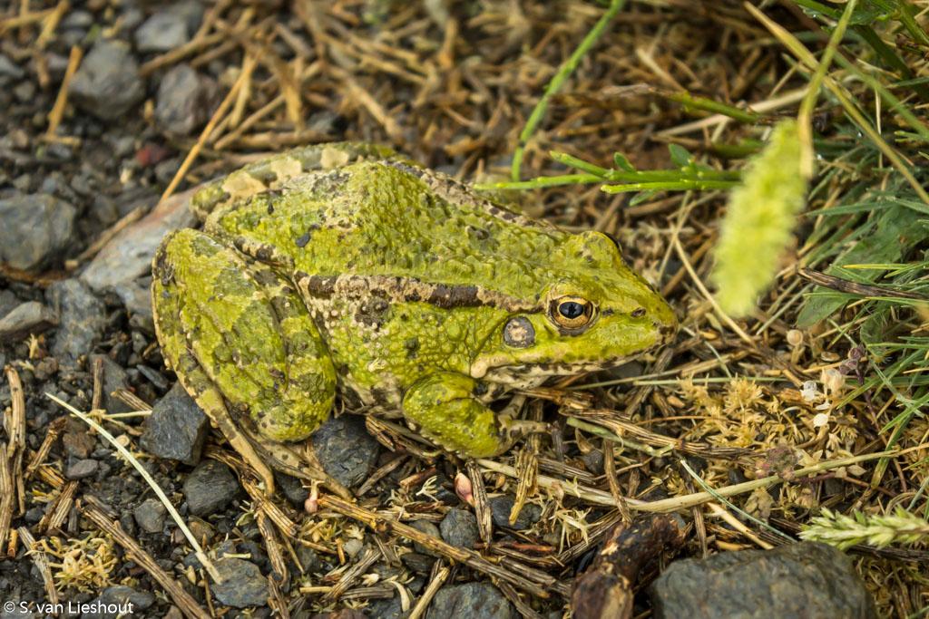 wildlife Sierra Nevada
