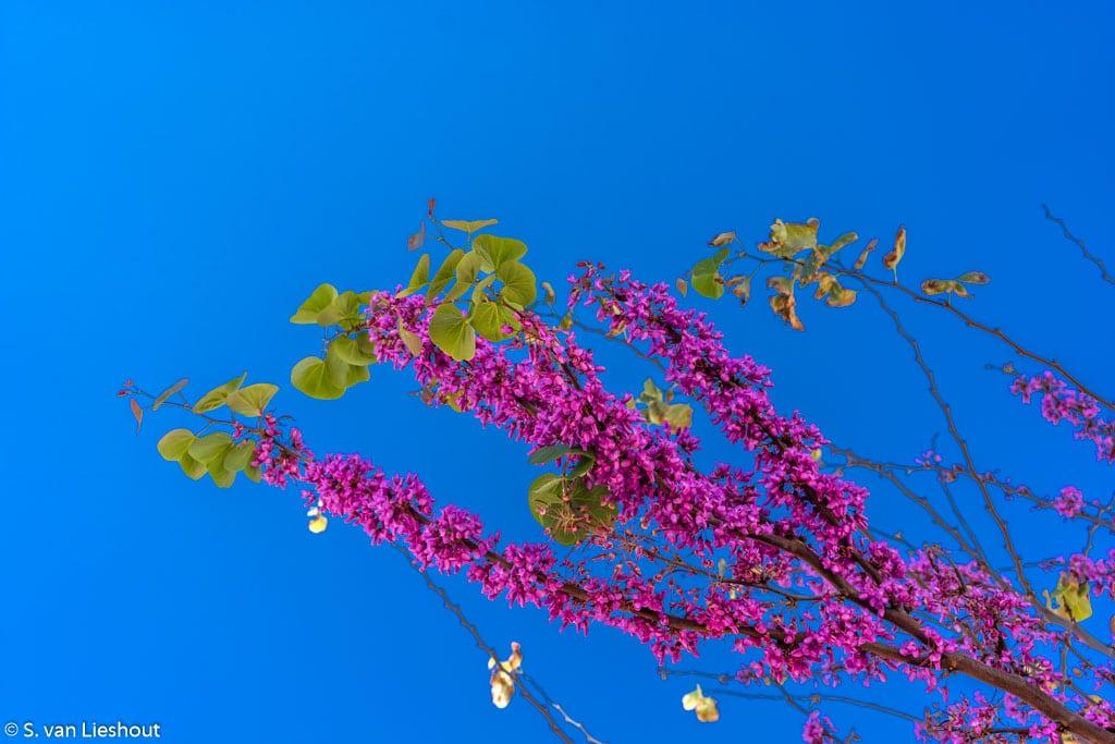springtime (1 of 1)