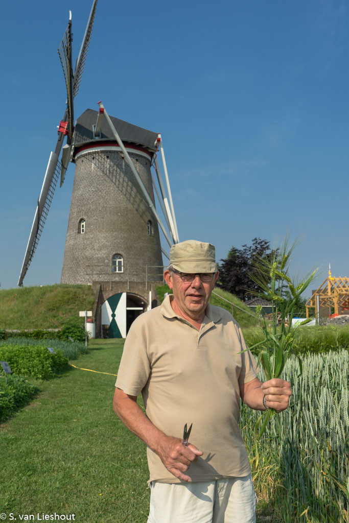 traditional mill Netherlands