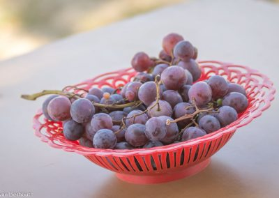 Serbian grapes