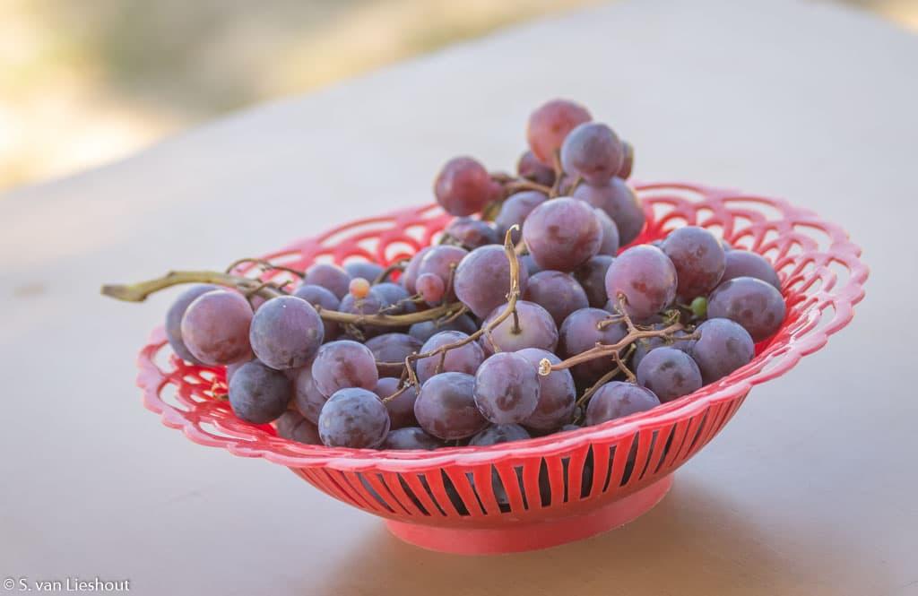wijn Servië