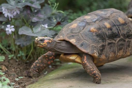 Benalmadena schildpadden-1-2