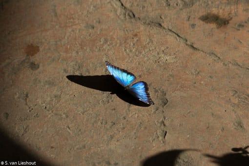 Satijnblauw