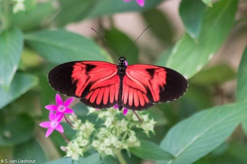 Vlinders in allerlei kleuren