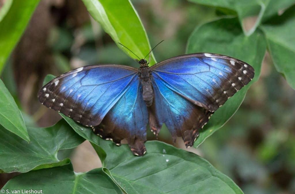 Benalmadena Butterfly Park Costa del Sol