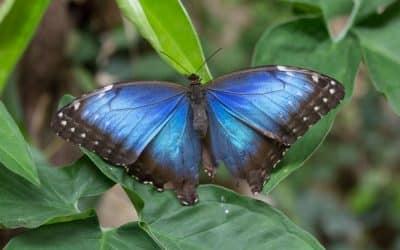 Benalmadena vlinderpark Costa del Sol