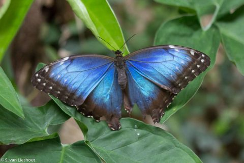 Benalmadena Butterfly Park