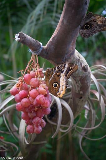 Vlindertuin Costa del Sol-1