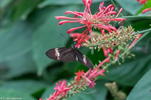 duizenden vlinders