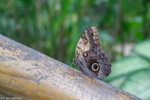 vlinders Benalmadena