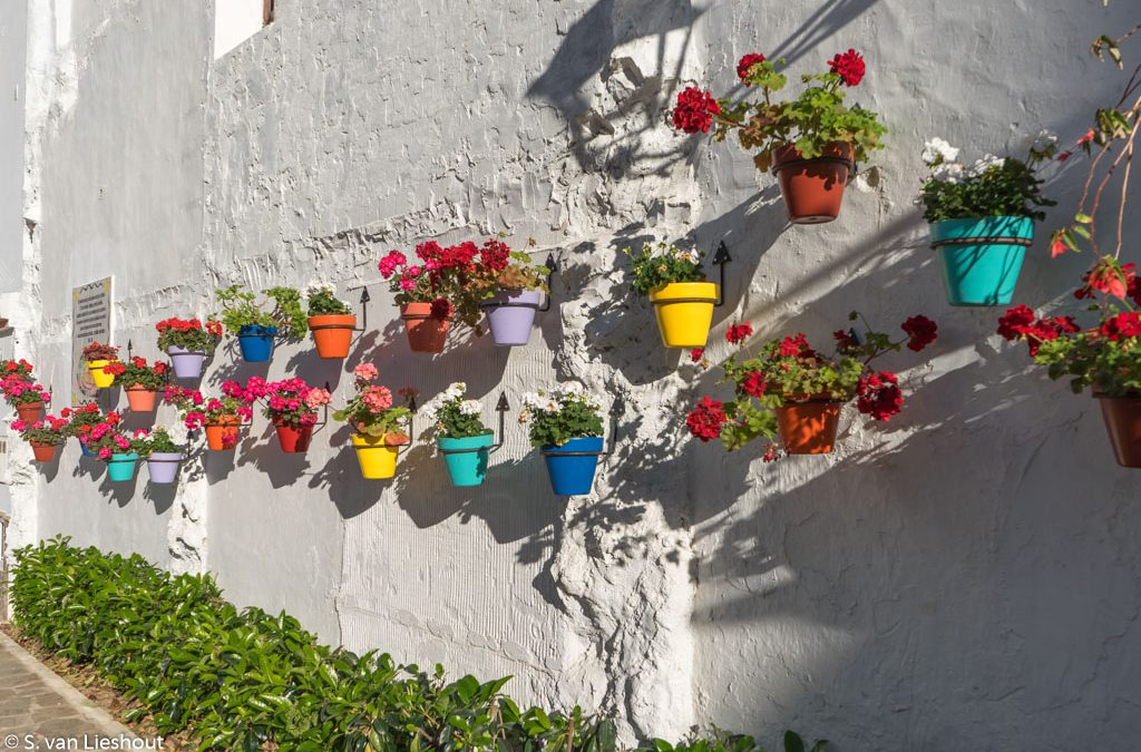 Discover the flower power of Estepona