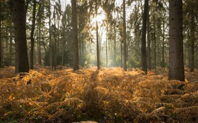 5 boswandelingen in de Limburgse winterzon