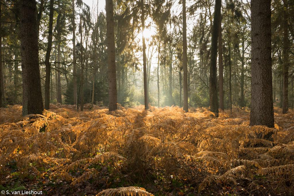 Leudal  boswandelingen in de winterzon