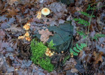 paddenstoelen Schadyk