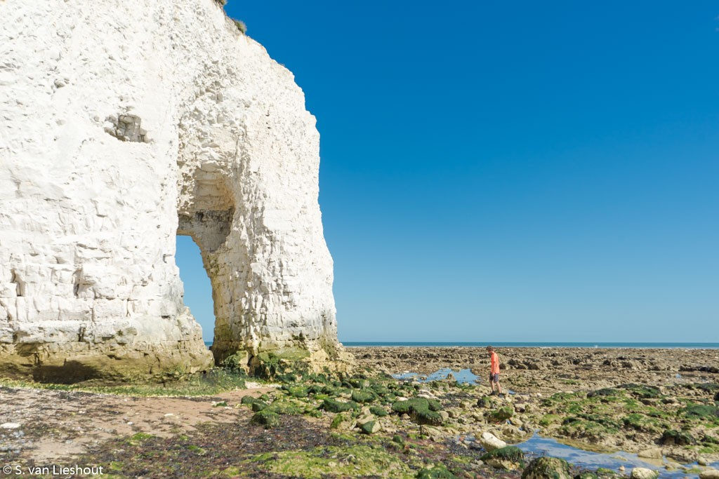 Botany bay white cliffs