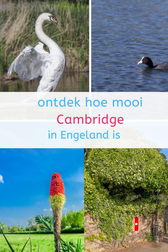 Natuurlijk Cambridge