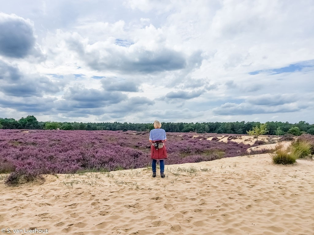 Nationaal Park Loonse & Drunense Heide