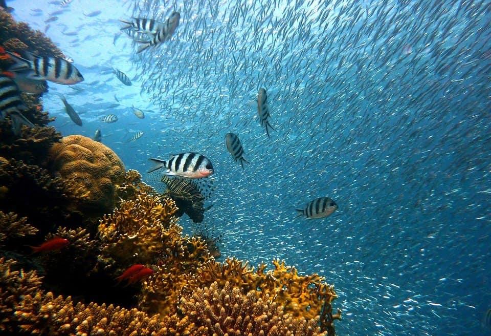 duiken Egypte